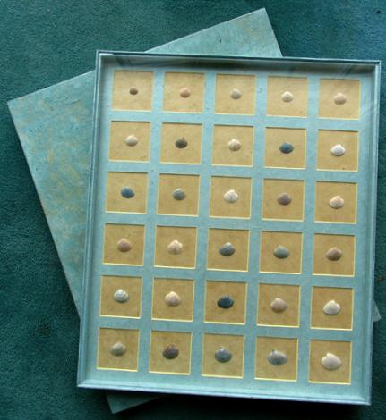 seashells-2.jpg